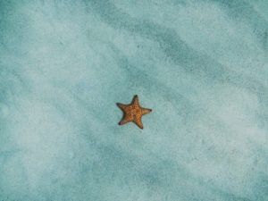 Starfish on blue background