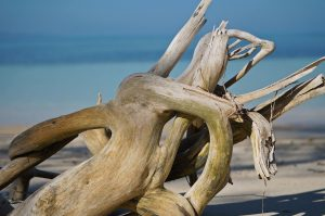 large driftwood on the beach